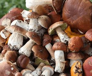 Отравление ложными грибами