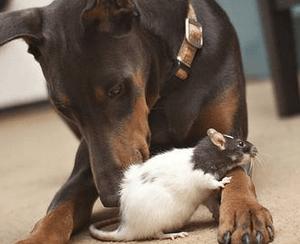 Первая помощь при отравлении крысиным ядом