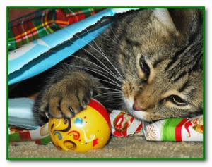 Симптомы отравления кошки
