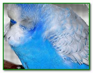 Попугай отравился