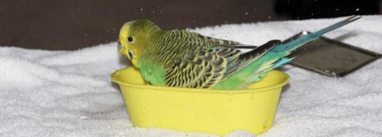 отравление попугая Причины