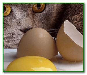 причины отравление кошки