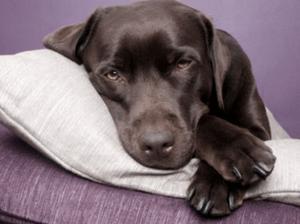 признаки отравления собаки