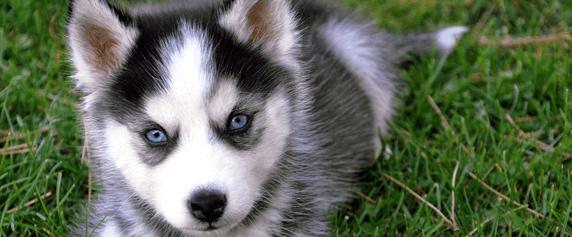 Отравление у собак признаки и симптомы