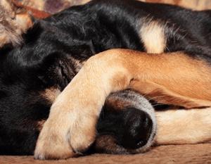 симптомы отравления собаки