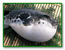 отравление Рыбой фугу