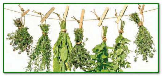 Полезные травы для очищения сосудов
