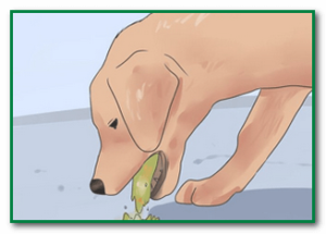 отравление крысиным у животных