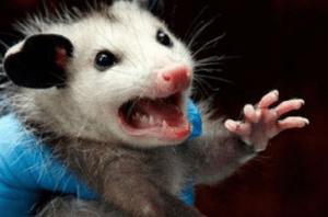 укусила мышь что делать