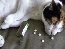 Отравление у домашней кошки