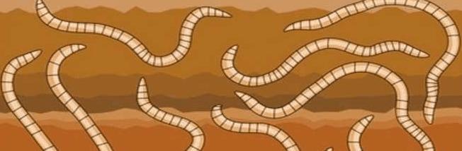 убить паразитов в организме народными средствами