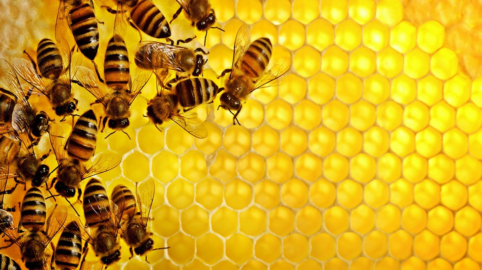Группа пчел