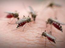 Укус комара, как избавиться от зуда и боли