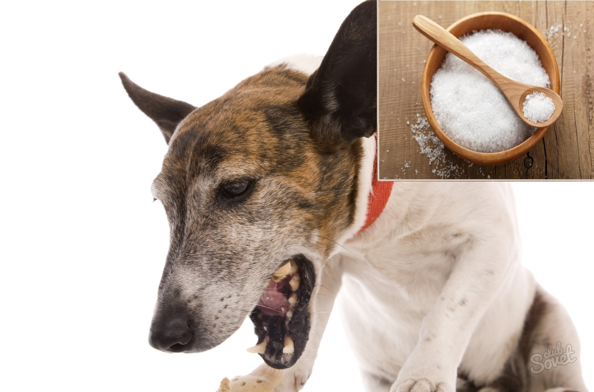home remedies for sick cats vomiting clear
