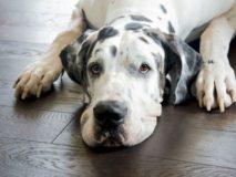 Что делать если в поносе собаки наблюдаются кровавые выделения