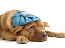 Понос и рвота у собаки, причины и первая помощь