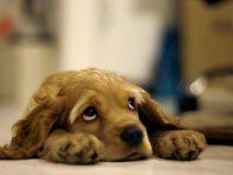 Что делать при отравлении у щенка, первая помощь