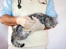 Как оказать первую помощь кошке при отравлении крысиным ядом