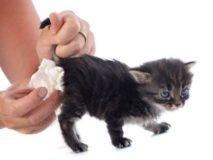 Причины и лечение поноса у маленького котенка