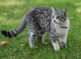 Причины и лечение рвоты желтого, коричневого и зеленого цвета у кошки