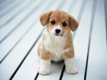 Причины и лечение поноса у щенков