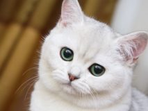 Причины и лечение рвоты пеной белого цвета у кошки