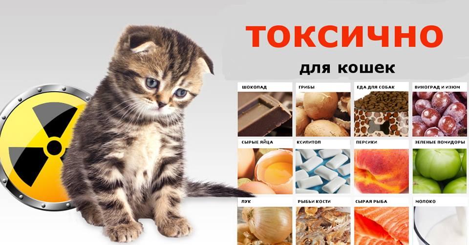 Что опасно для кошек