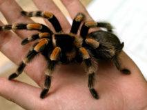 Как распознать укус паука и оказать первую помощь