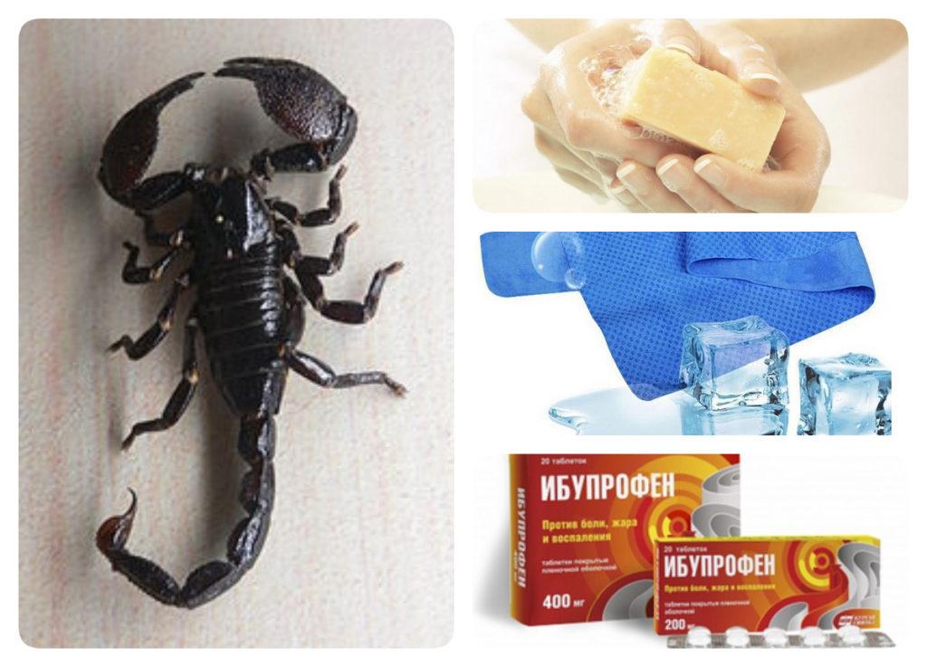 укус скорпиона помощь
