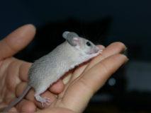 Мышка бежала, хвостиком махнула и… укусила