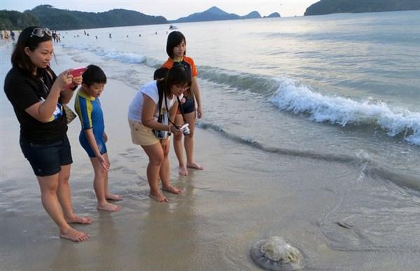 укус медузы во вьетнаме