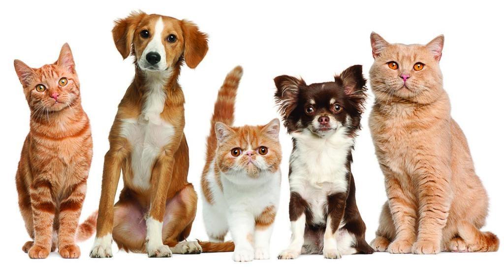 клопы и домашние животные